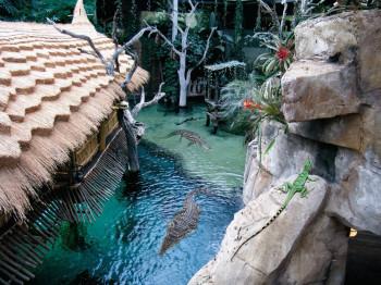 Wer ein echtes Nil-Krokodil sehen will, muss nicht nach Ägypten reisen; Hamburg reicht auch.