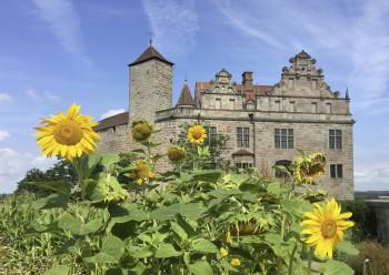 Sonnenblumen blühen vor der Cadolzburg bei Fürth.