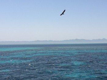 Das Rote Meer ist wegen seiner Unterwasserwelt vor allem bei Tauchern und Schnorchlern beliebt