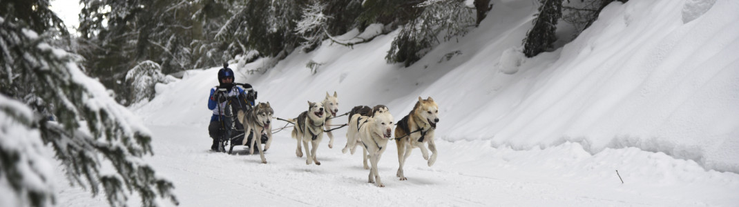 Das alljährliche Schlittenhunderennen in Todtmoos findet auch 2021 statt.