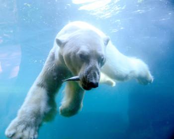 Im Zoo am Meer erlebst du Polar- und Meeresbewohner ganz nah.