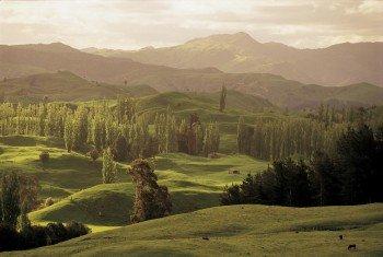 Raue Küsten, aktive Vulkane, traumhafte Strände oder sanftes Hügelland - Neuseeland ist Vielfalt pur!