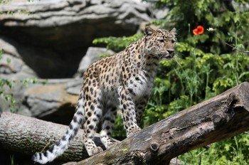 Auch Tierparks eigenen sich perfekt für einen Familienausflug. Zu sehen gibt es auch Leoparden, wie hier in Leipzig.
