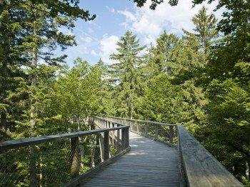 In luftiger Höhe schlängelt sich der Baumwipfelpfad durch die Natur des Bayerischen Waldes.