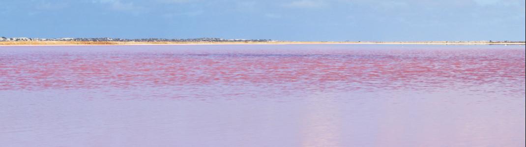 Dieser Pink Lake liegt in der Nähe von Geraldton in Western Australia.