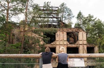 Der Baumwipfelpfad führt dich vorbei an den Ruinen der ehemaligen Beelitz Heilstätten.