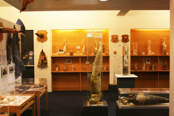 At Icelandic Phallological Museum you can find male genitals of all sizes and shapes and of all of the island's mammals.