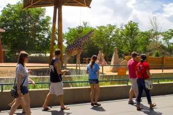 A group passing by stunning giraffes at Denver Zoo.