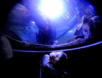 The Downtown Aquarium Denver is a sprawling complex with a state-of-the-art aquarium housing 500+ species, plus a restaurant & lounge.