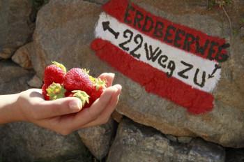 Entlang des Weges werden immer wieder Erdbeeren zum Naschen verkauft.