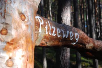 Aus Baumstämmen wurden nicht nur die Wegweiser, sondern auch große Pilze gestaltet.
