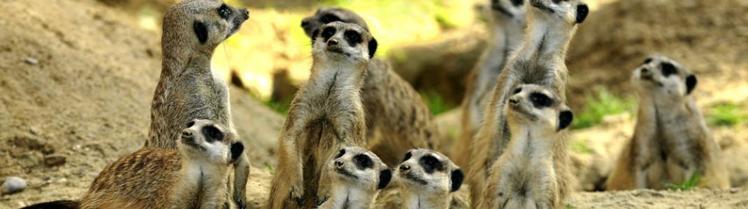 Nach fast 2 Monaten Pause sind die Zoos wieder geöffnet.