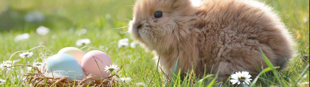 Wo darf der Osterhase in diesem Jahr euer Nest verstecken?