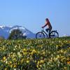 Saftige Wiesen und Alpenpanorama - vor allem im Frühling ist das Chiemgau landschaftlich ein Traum für alle Bergsportler