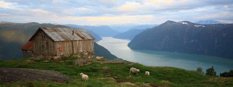 Blick über den Sognefjord