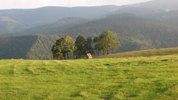 The landscape around Păltnis