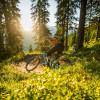 Auch durch den Wald führt ein Stück des Hacklberg Trails.