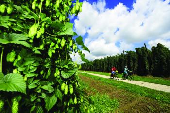 Der 244 km lange Radweg führt quer durch die Hallertau.
