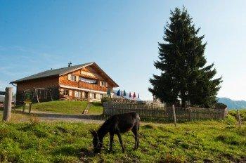 Die Alpe Rona Sennerei stellt selber Milchprodukte her