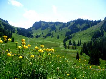Die aussichtsreiche Rundtour verläuft von Bezau nach Schönenbach und zurück über den Schreiberesattel und die Wildmoosalpen.