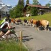 Die Tour de Gstaad classique hat alle Zutaten zu einem Klassiker.