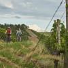 Wer gerne radelt und gute Tropfen zu schätzen weiß, kann auf dem Württemberger Weinradweg beides verbinden