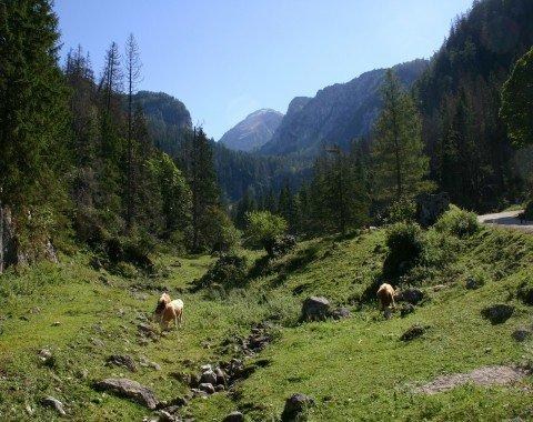 On the way to Königsbach Alp.