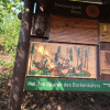Information boards along the way teach you about the bark beetle and the forest as an eco system.