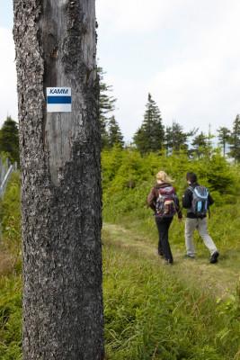 Kammweg hiking path takes you up Fichtelberg mountain.