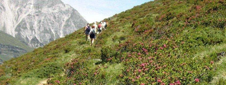 Alpenrosenweg