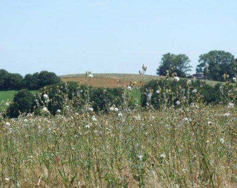 Via meadows and fields you'll reach your destination.