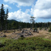 hiking bavarian forest