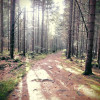 Hike through the quiet forest