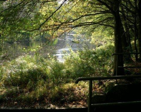 Untouched nature along the Ilz.