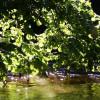 The river Wutach