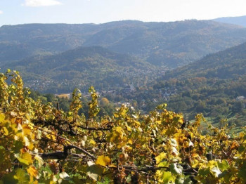 Soft vineyards and a view of Staufenberg - that is true Black Forest flair.