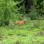 Mit etwas Glück kannst du im Wildschutzgebiet Rehe sehen