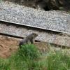 Auf dem Weg kann man Murmeltiere beobachten