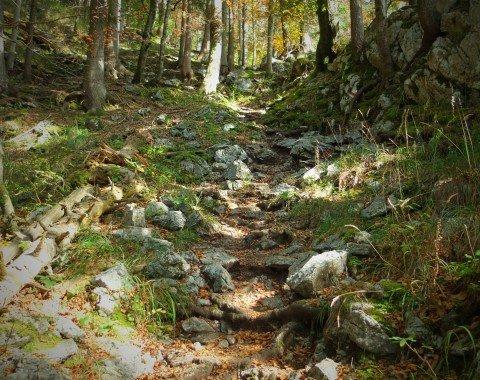 Idyllisch durch den Wald