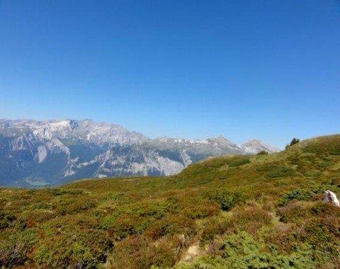 Einmalige Ausblicke und prächtige Vegetation