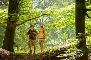 Der Wanderweg verläuft immer wieder durch die Wälder der Eifel.