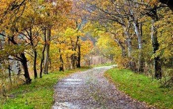 Ein Teil des Weges gehst du durch den Kollunder Wald