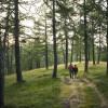 Der Weg führt über die Eulenwiesen und durch den Lärchenwald.