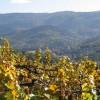 Sanfte Weinberge und ein Blick auf den Staufenberg - Das ist wahres Schwarzwald-Flair