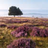 Entdecke die größten zusammenhängenden Heideflächen Nordeuropas!