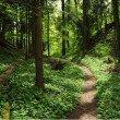 Im stillen Wald