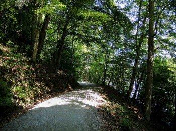 Ein Großteil der Strecke führt durch grüne Wälder.