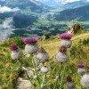 Blick vom Alpenblumengarten aus