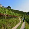 Der Weinlehrpfad führt von Kurtatsch nach Margreid. Die Orte besitzen insgesamt etwa 500 Hektar Rebflächen.