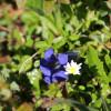 Für Farbtupfer sorgen die Blumen am Wegesrand.